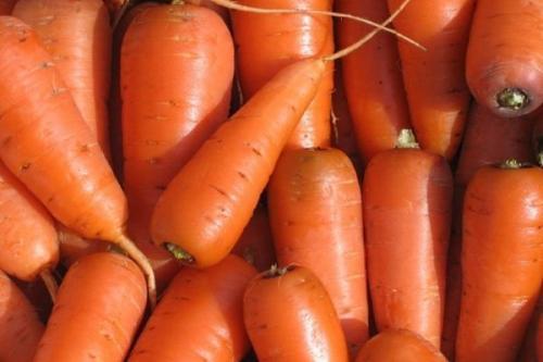 Морковь. 57 популярных сортов моркови