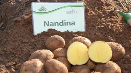Картофель нандина описание сорта. Раннеспелый сорт картофеля «Нандина» с хорошей лежкостью