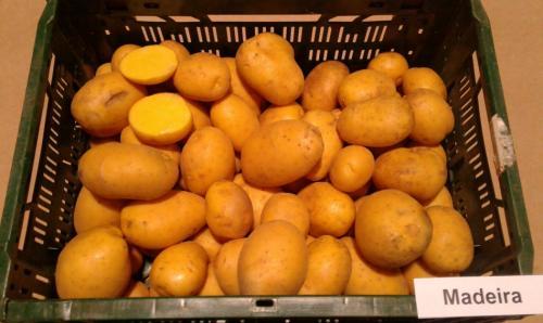 Мадейра картофель. Сверхпродуктивная новинка от немецкой фирмы «Европлант» — картофель Мадейра: описание сорта и отзывы