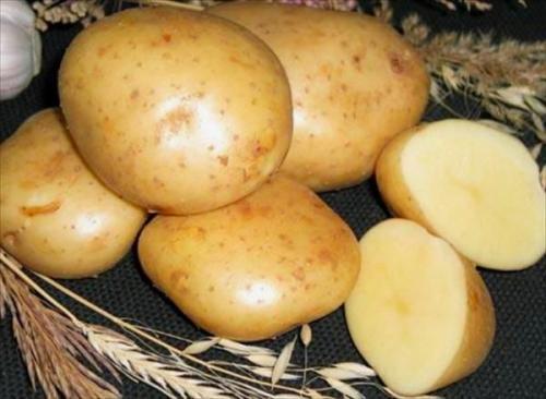 Картофель гала: описание сорта. Описание сорта картофеля Гала