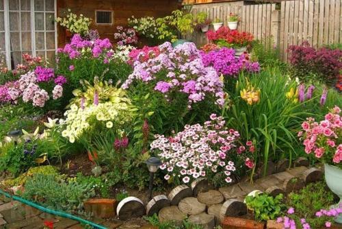 Высокие многолетние цветы. Многолетние садовые цветы, цветущие все лето