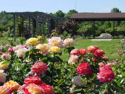 Какие удобрения вносить под розы осенью. Нужно ли удобрять розы осенью перед их зимовкой