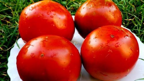 Томат Красная стрела характеристика и описание сорта. Характеристика и описание гибрида томатов Красная стрела f1