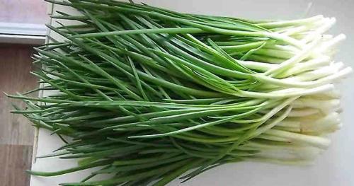 Как вырастить зеленый лук в домашних условиях на подоконнике без земли. Гениальный способ выращивания зелёного лука дома без земли и горшка