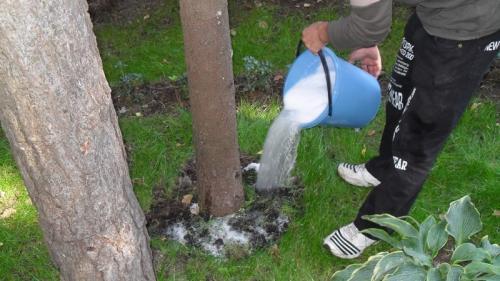 Чем подкормить груши осенью. Руководство по подкормке груши осенью для начинающих садоводов