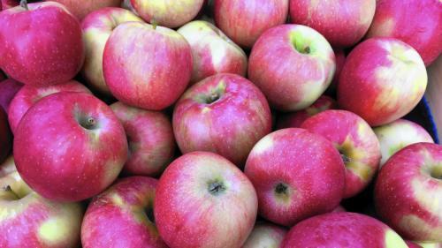 Зимние сорта яблок. Всё про зимние сорта яблок